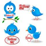 Μπλε πουλί Στοκ Εικόνες