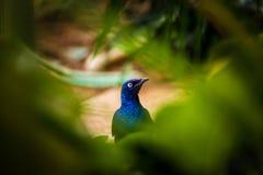 Μπλε πουλί στοκ φωτογραφία με δικαίωμα ελεύθερης χρήσης