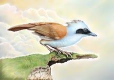 Μπλε πουλιά Στοκ εικόνα με δικαίωμα ελεύθερης χρήσης