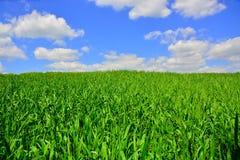 μπλε πράσινος ουρανός χλόης κάτω Στοκ εικόνες με δικαίωμα ελεύθερης χρήσης