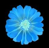 Μπλε πυράκτωση λουλουδιών στο σκοτάδι Στοκ Εικόνες