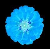 Μπλε πυράκτωση λουλουδιών στο σκοτάδι Στοκ φωτογραφία με δικαίωμα ελεύθερης χρήσης