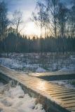 μπλε ραβδί χιονιού ουραν&o Στοκ Φωτογραφία