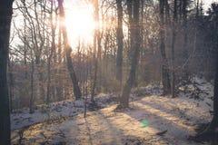 μπλε ραβδί χιονιού ουραν&o Στοκ Φωτογραφίες