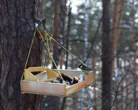 Μπλε σίτιση tit το χειμώνα Στοκ φωτογραφία με δικαίωμα ελεύθερης χρήσης