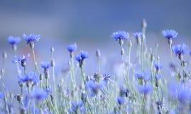 Μπλε σημείωση Στοκ εικόνες με δικαίωμα ελεύθερης χρήσης