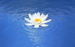 Μπλε σκηνή κρίνων νερού λουλουδιών Lotus Στοκ Φωτογραφία