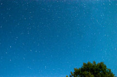 Μπλε σκοτεινός νυχτερινός ουρανός με πολλά αστέρια επάνω από τον τομέα των δέντρων Κόσμος Milkyway Στοκ εικόνες με δικαίωμα ελεύθερης χρήσης