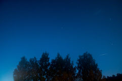 Μπλε σκοτεινός νυχτερινός ουρανός με πολλά αστέρια επάνω από τον τομέα των δέντρων Κόσμος Milkyway Στοκ Εικόνες