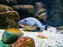 Μπλε στήριξη ψαριών στοκ εικόνες