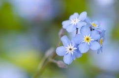 μπλε στενό λουλούδι επάνω Μακροεντολή Στοκ Φωτογραφίες