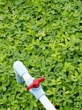 Μπλε σωλήνας στον πράσινο τομέα στοκ εικόνες με δικαίωμα ελεύθερης χρήσης