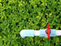 Μπλε σωλήνας στον πράσινο τομέα στοκ φωτογραφίες