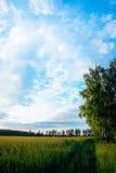 Μπλε σύννεφα πέρα από έναν τομέα της χλόης Στοκ Φωτογραφία