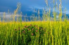μπλε σύννεφα σε ένα πράσινο ξέφωτο Στοκ φωτογραφία με δικαίωμα ελεύθερης χρήσης