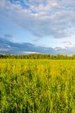 μπλε σύννεφα σε ένα πράσινο ξέφωτο Στοκ Φωτογραφίες