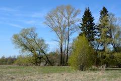 μπλε σύννεφων πλήρες πράσινο τοπίο εστίασης πεδίων ημέρας οφειλόμενο λίγη μετακίνηση όχι εμφανίζει στον ουρανό κάποια άνοιξη που  Στοκ Φωτογραφία