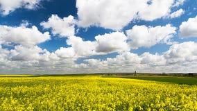 μπλε σύννεφων πλήρες πράσινο τοπίο εστίασης πεδίων ημέρας οφειλόμενο λίγη μετακίνηση όχι εμφανίζει στον ουρανό κάποια άνοιξη που  Στοκ Εικόνα