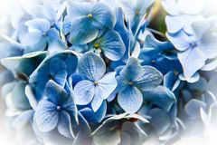 Μπλε σύντομο χρονογράφημα λουλουδιών Στοκ εικόνες με δικαίωμα ελεύθερης χρήσης