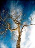 Μπλε της Aspen Στοκ εικόνες με δικαίωμα ελεύθερης χρήσης