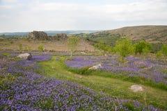 Μπλε τοπίο κουδουνιών Dartmoor Στοκ εικόνα με δικαίωμα ελεύθερης χρήσης