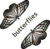 Μπλε υαλώδης τίγρη πεταλούδων ελεύθερη απεικόνιση δικαιώματος