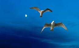 Μπλε φεγγάρι και seagulls Στοκ Φωτογραφίες