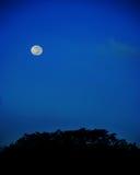 Μπλε φεγγάρι στη σκηνή νύχτας Στοκ φωτογραφία με δικαίωμα ελεύθερης χρήσης