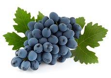 Μπλε φρούτα σταφυλιών με το φύλλο Στοκ Εικόνες