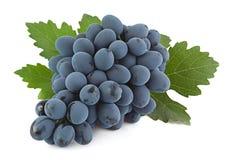 Μπλε φρούτα σταφυλιών Στοκ Εικόνες