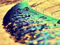 μπλε φτερό Στοκ Φωτογραφίες