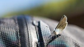 μπλε φως πεταλούδων στοκ εικόνα με δικαίωμα ελεύθερης χρήσης