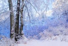 Μπλε χιονώδες δάσος στοκ φωτογραφία