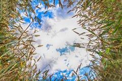 μπλε χρυσός ουρανός καλ&a Στοκ φωτογραφίες με δικαίωμα ελεύθερης χρήσης
