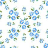 Μπλε cammomiles - σχέδιο watercolor Στοκ εικόνα με δικαίωμα ελεύθερης χρήσης
