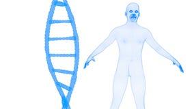 Μπλε DNA και ανθρώπινο ολόγραμμα wireframe Απεικόνιση αποθεμάτων