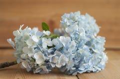 μπλε hydrangea Στοκ Εικόνα
