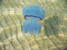 μπλε jellyfish Στοκ Εικόνα