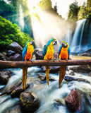 μπλε macaw ararauna ara κίτρινο Στοκ εικόνες με δικαίωμα ελεύθερης χρήσης