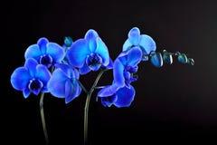 μπλε orchid λουλουδιών Στοκ Εικόνες