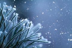 μπλε snowflakes ανασκόπησης άσπρος χειμώνας Καλυμμένος κλάδοι παγετός δέντρων πεύκων Στοκ Εικόνες