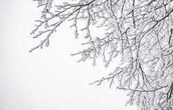 μπλε snowflakes ανασκόπησης άσπρος χειμώνας Χιονοπτώσεις στο δάσος Στοκ εικόνες με δικαίωμα ελεύθερης χρήσης