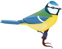 μπλε tit Στοκ φωτογραφία με δικαίωμα ελεύθερης χρήσης