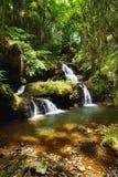 Μυθικές πτώσεις Onomea που βρίσκονται στον τροπικό βοτανικό κήπο της Χαβάης στο μεγάλο νησί της Χαβάης Στοκ εικόνα με δικαίωμα ελεύθερης χρήσης