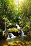 Μυθικές πτώσεις Onomea που βρίσκονται στον τροπικό βοτανικό κήπο της Χαβάης στο μεγάλο νησί της Χαβάης Στοκ Εικόνες