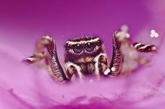 Μυθική αράχνη Στοκ Φωτογραφίες