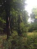 Μυθική κουκούλα Στοκ Εικόνες