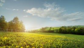 Μυθικό τοπίο, τομέας νωρίς το πρωί, όμορφα κίτρινα λουλούδια στο πρώτο πλάνο. Στοκ φωτογραφίες με δικαίωμα ελεύθερης χρήσης