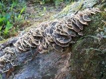 Μυκητιακός σχηματισμός Στοκ Φωτογραφία