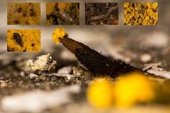 Μυκητιακό σύνθετο πανίδας στοκ φωτογραφίες